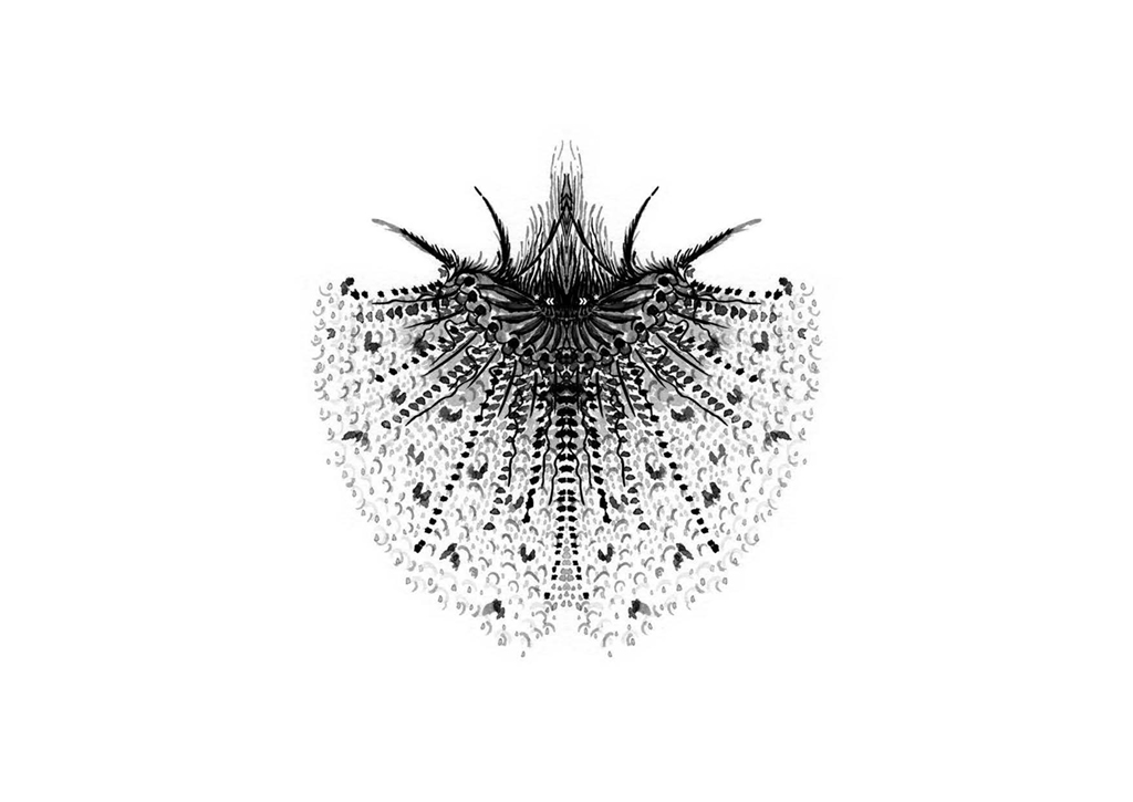 Edition insectes_Page_10
