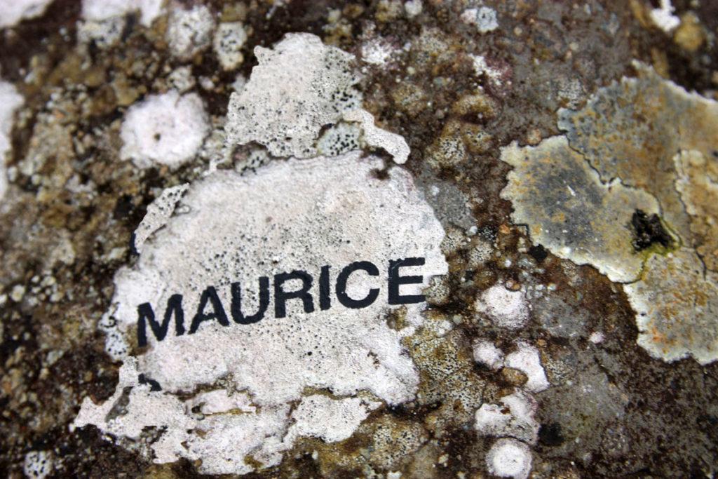 maurice-1-IMG_8079